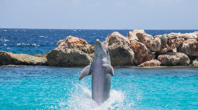 dolphin cove tour jamaica