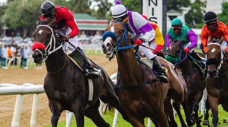 horse race jamaica